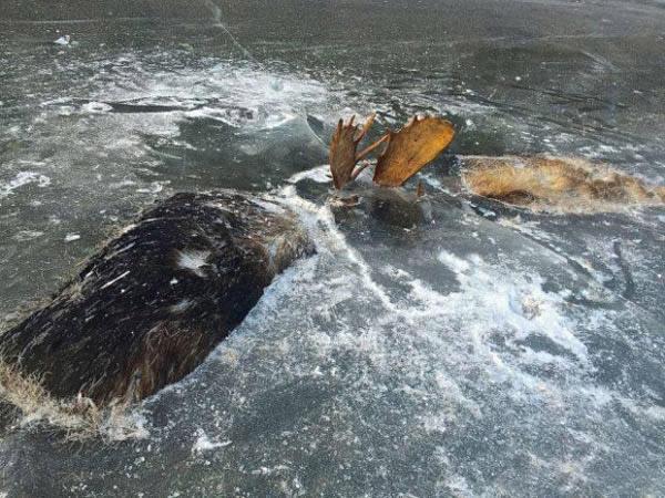 动物意外被封在冰里,最后一个让人咂舌(组图)